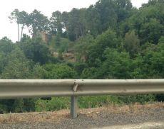 In lontananza, il taglio di piante lungo la circonvallazione segnalato da Maurizio Giannelli