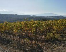 Il Brunello diventa smart con la viticoltura di precisione