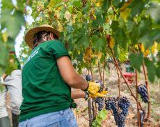 L'Harvest Experience di Castiglion del Bosco
