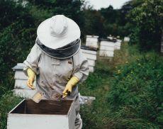 La produzione di miele in Toscana e non solo è in difficoltà