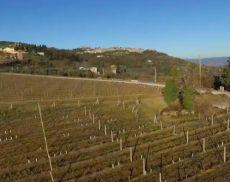 Veduta di Montalcino