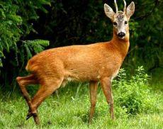 Sette associazioni hanno richiesto lo stop alla caccia
