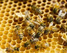 Il miele più buono del 2018 è di corbezzolo