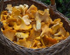 Un paniere di funghi