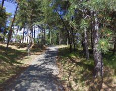 La Pineta di Montalcino
