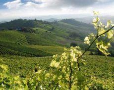 Toscana del vino pronta a riaprire gli Albi dei Vigneti