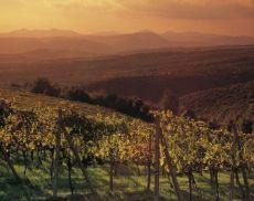 Una veduta delle vigne di Montalcino