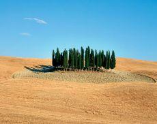 I cipressini sono una delle attrazioni più famose di San Quirico e della Valdorcia (fonte foto: www.parcodellavaldorcia.com)