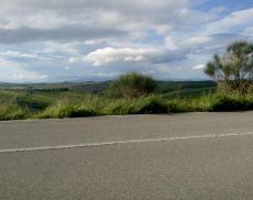 Erba alta lungo la strada tra Montisi e San Giovanni d'Asso