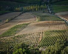 Le vigne de Il Marroneto