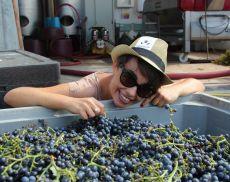 Violante Gardini, Presidente del Movimento Turismo Vino Toscana